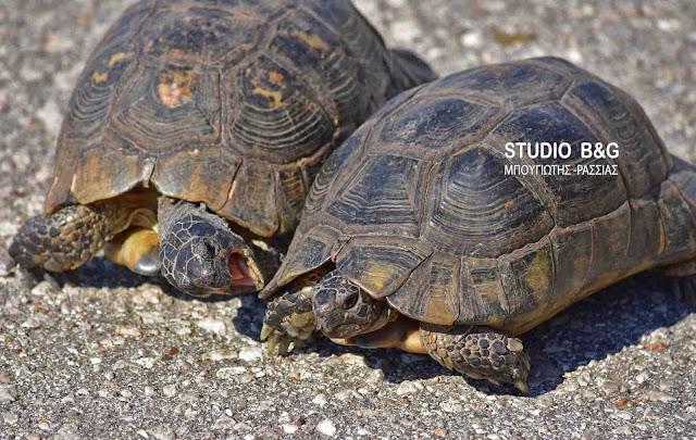 Η φωτογραφία της ημέρας: Οι χελώνες