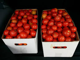 WOMEN IN AG: Where Do You Store Your Tomatoes? 1