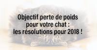 Objectif perte de poids pour votre chat : les résolutions pour 2018 !