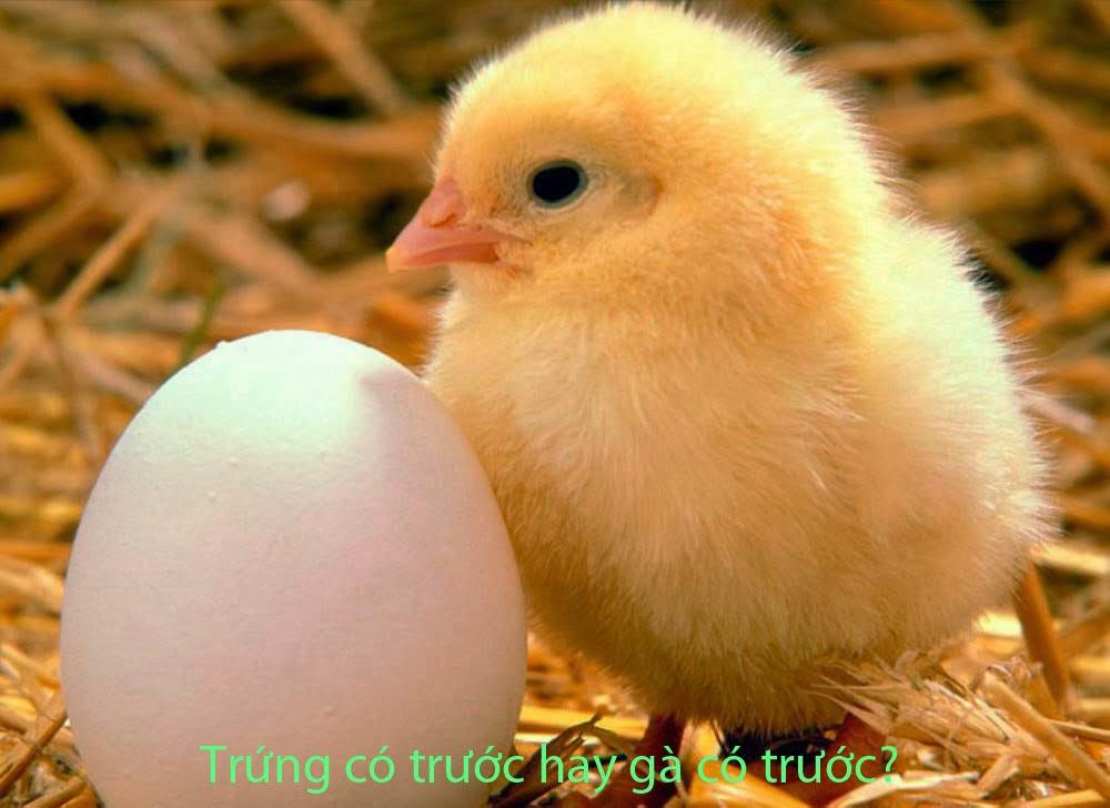 Trứng có trước hay gà có trước?