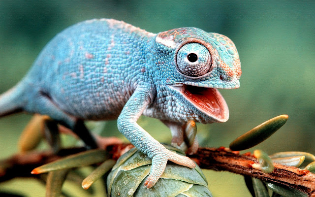 Rochak Tathya - Lizard Facts In Hindi
