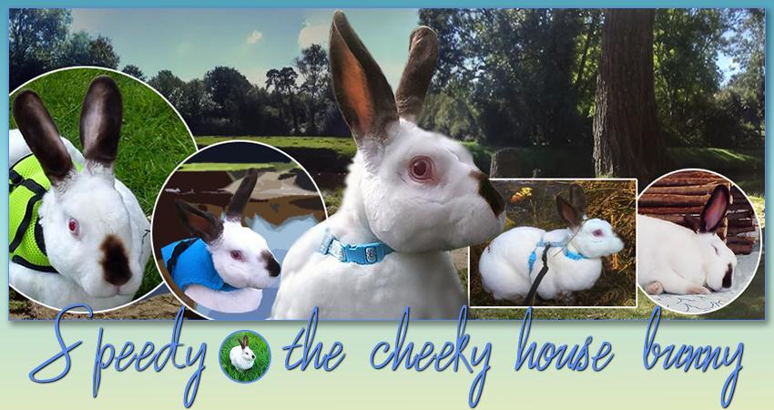 Angel Speedy the cheeky house bunny