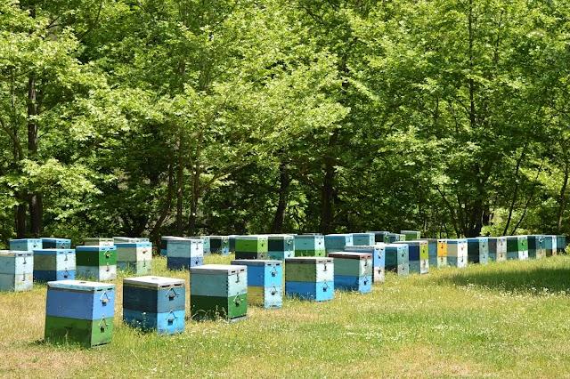 Μελισσοκομικοί Χειρισμοί Νοεμβρίου!