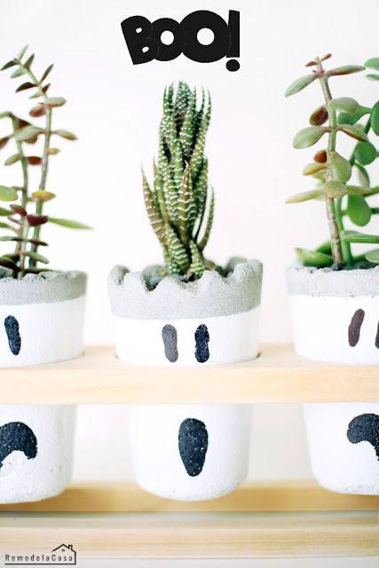 Little succulent plants on wooden stand