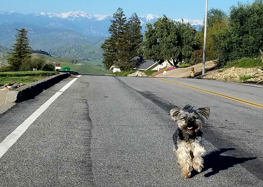 Shasta's California Dreamin' Senior Dog Bucket List