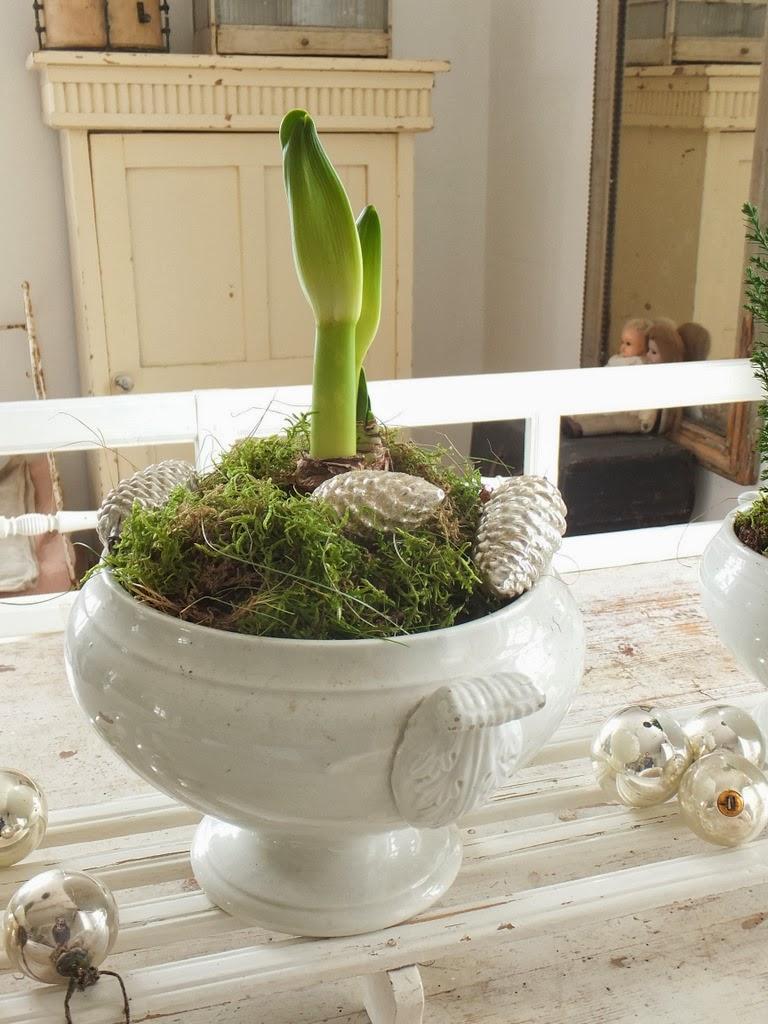 princessgreeneye amaryllis die 2 offene fragen. Black Bedroom Furniture Sets. Home Design Ideas