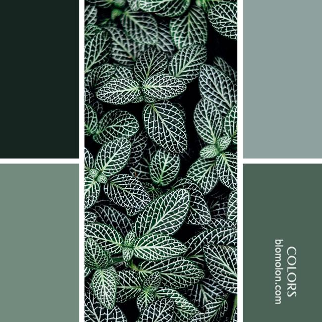 variedad_en_color_combinacion_11