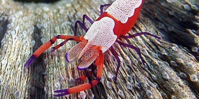 6 Hewan Laut Paling Aneh di Dunia, Menyeramkan Gan!!
