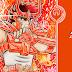 Revelada capa do 9º volume nacional do Kanzenban de Saint Seiya!