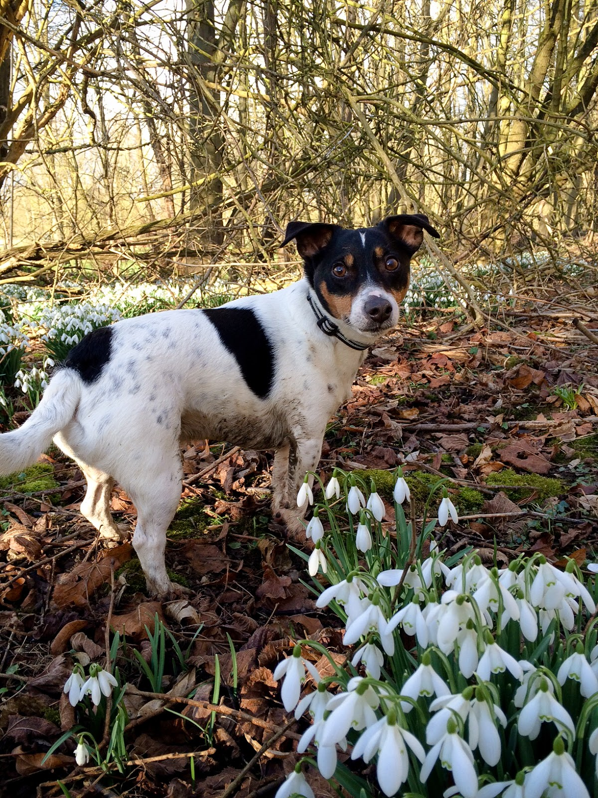 Ralphy the dog  in woodland - photograph by A Handmade Cottage