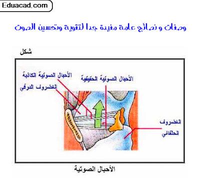 معلومات,ثقافة,تعلم,صحة,وصفات,نصائح,معلومة,هل تعلم,فيديو,صور,انترنت,