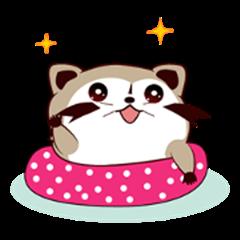 North American Raccoon (V7)