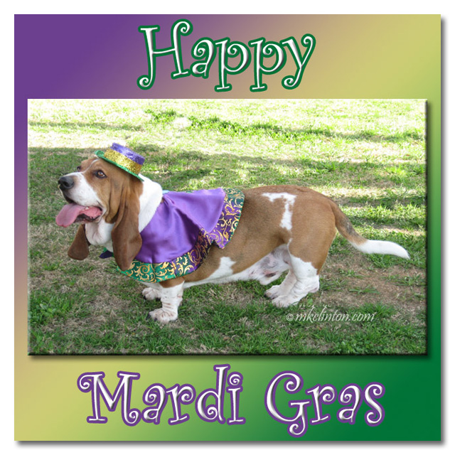 Bentley Basset Hound wishes you a happy Mardi Gras
