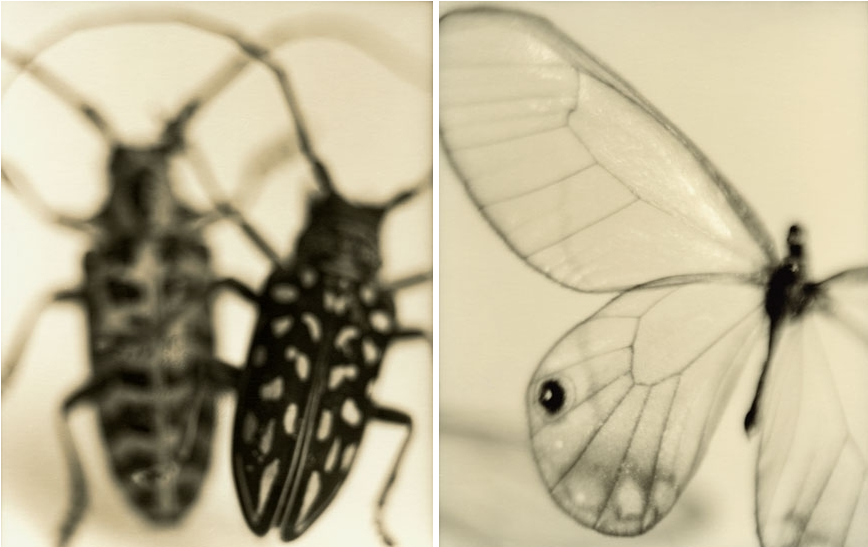 Simple Fine art insect photos from the series Sometimes With Shadows Sandi Fellman photos
