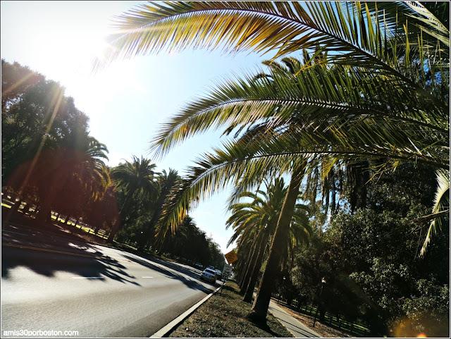 Palm Drive, Universidad de Stanford