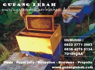 lebah madu asli menghasilkan madu asli di tangerang
