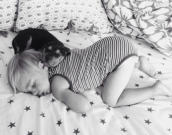dog and toddler napping together 4