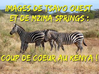 Tsavo Ouest et Mzima Springs