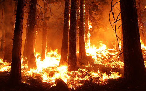Forest wildfire causing trees to release massive amounts of carbon