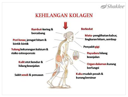 Image result for kolagen shaklee dan sendi