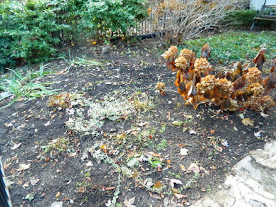 Cabbagetown Toronto Fall Front Yard Garden Clean up by Paul Jung Gardening Services after