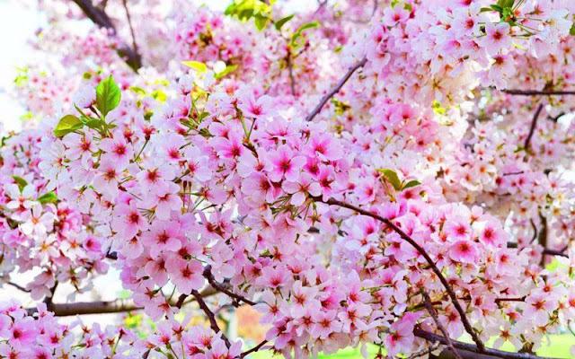 hình ảnh hoa đẹp nhất thế giới 14