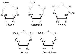 Exemplos de monossacarídeos