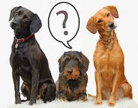 Los Animales para comunicarse con los seres humanos usan el lenguaje de ellos. El lenguaje animal es una versión modificada del mismo lenguaje humano temprano solamente que los animales carecen de complejidad y son menos expresivos.