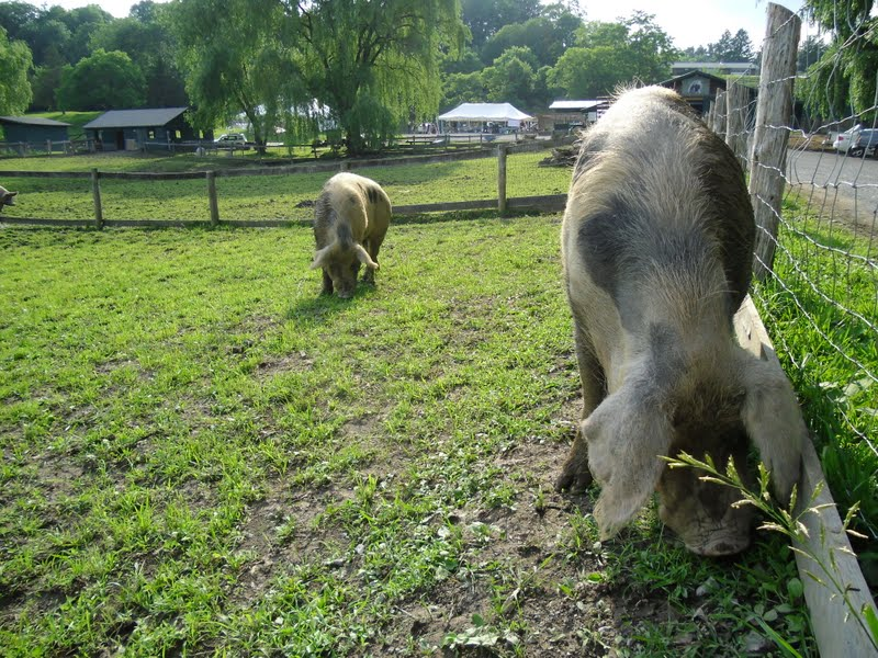 A (soy) Bean: Catskill Animal Sanctuary: Go There and Love On Some