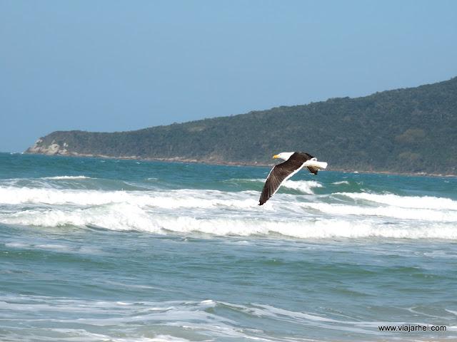 5 passeios imperdíveis em Florianópolis - www.viajarhei.com
