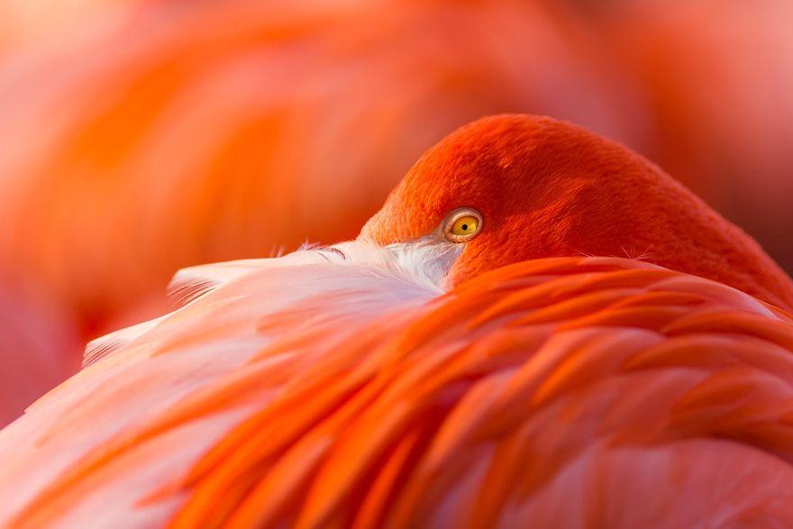 Chiêm ngưỡng những bức ảnh chim hồng hạc đẹp nhất trên thế giới (phần 2), in hồng hạc