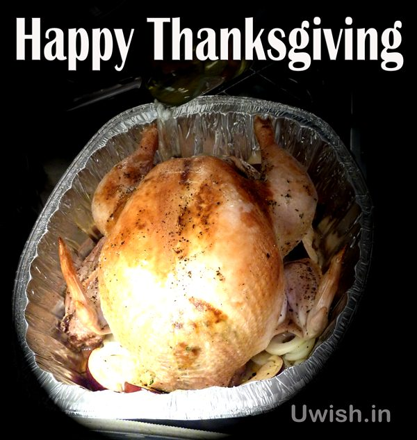 Happy Thanksgiving wishes and greetings with turkey as treat