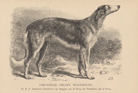 Карачаевская карачеркасская овчарка Circassian Orloff  Wolfhound