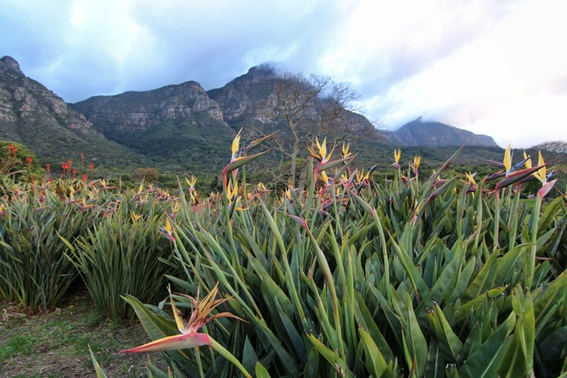 Jardín Botánico Kirstenbosch