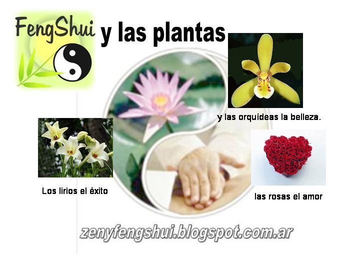 Zen y feng shui tao feng shui plantas - Como atraer el dinero feng shui ...
