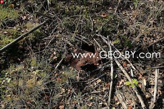 Puszcza Nalibocka. A piece of rusty iron among the partisan forest