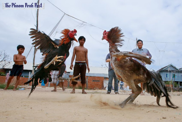 People watch as two cocks engage in a fight at a village in Kampong Speu province in 2014. Heng Chivoan
