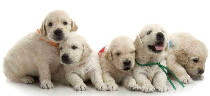 puppies socialization checklist window how to before vaccinations schedule class chart near me classes