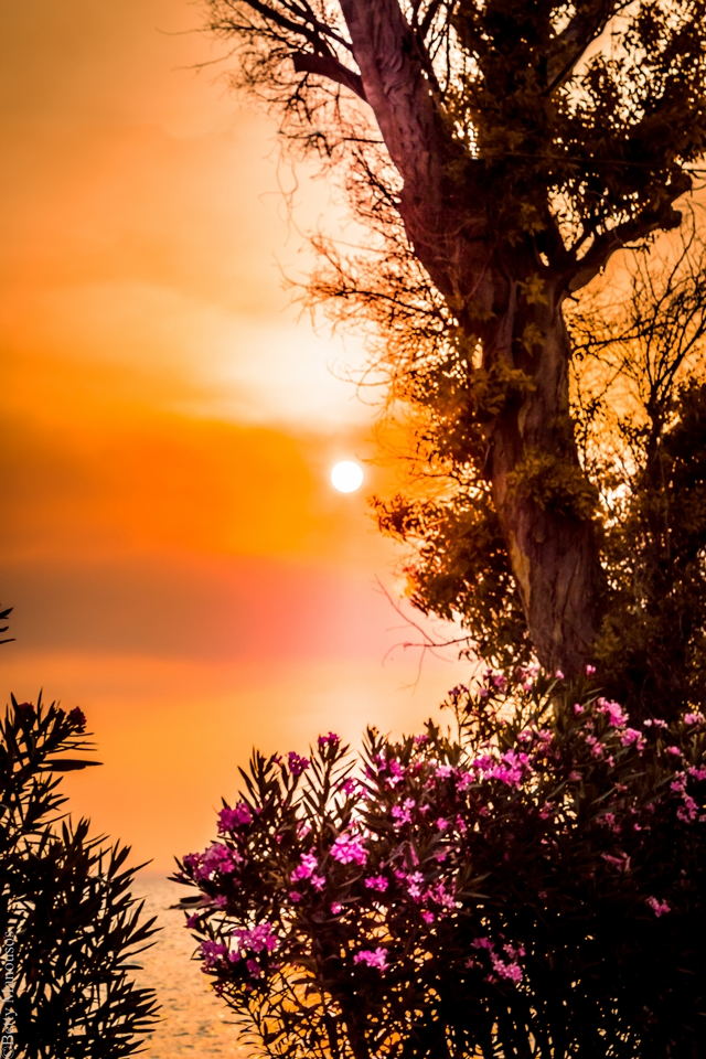 beautiful sunset and tree during the golden hour