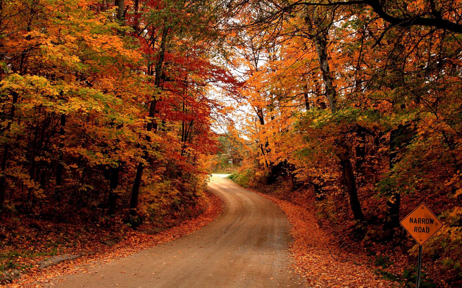Desktop Wallpapers: Autumn Road Desktop Wallpapers
