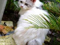 Alasan Kucing akan Menoleh Saat Dipanggil Pus