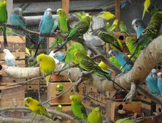 Bisnis Ternak Burung