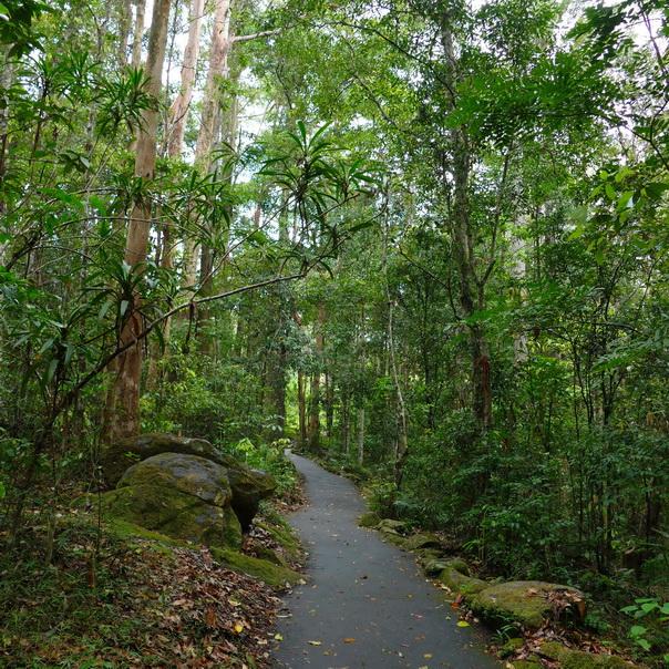 Regenwald Pfad Kondilla Falls Felsen