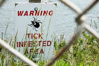 4 Steps to Prevent Lyme Disease