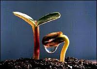 Makhluk hidup mengalami pertumbuhan dan perkembangan Pengertian Tumbuh