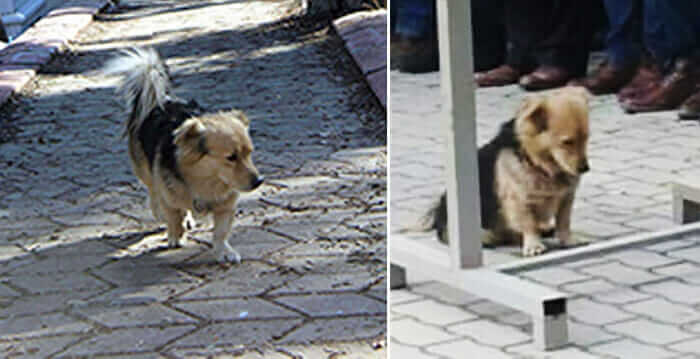 Grieving Dog Leaves His Home Every Day After His Owner Died. The Reason Will Make You Cry!