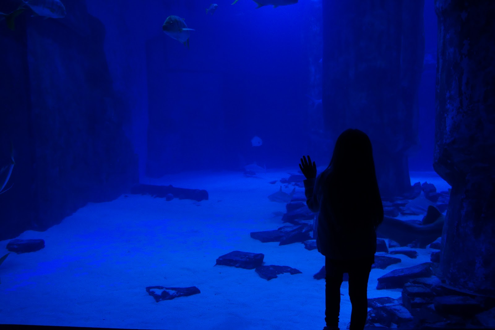 girl in front of shark tank