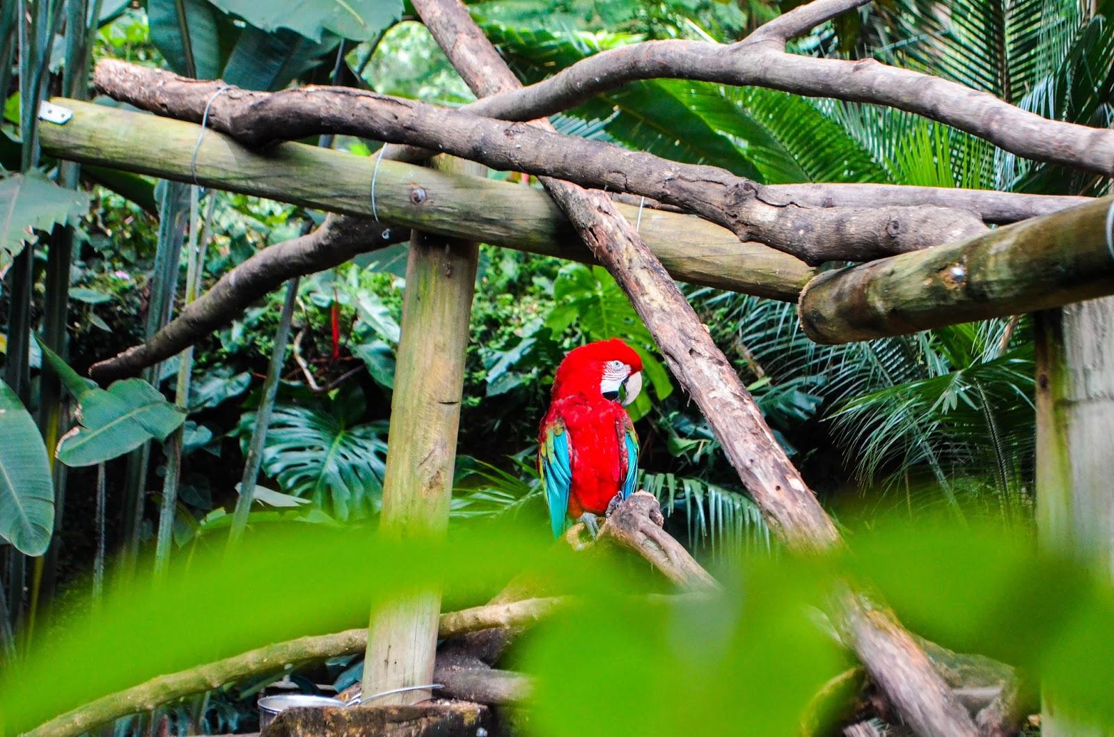 Cali, Colômbia - Zoológico e Pontos turísticos