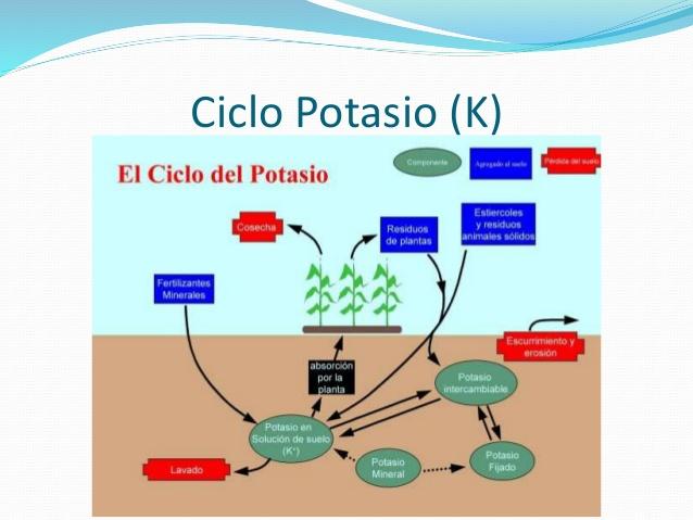 ¿Por dónde empezar con metabolismo de las proteínas?