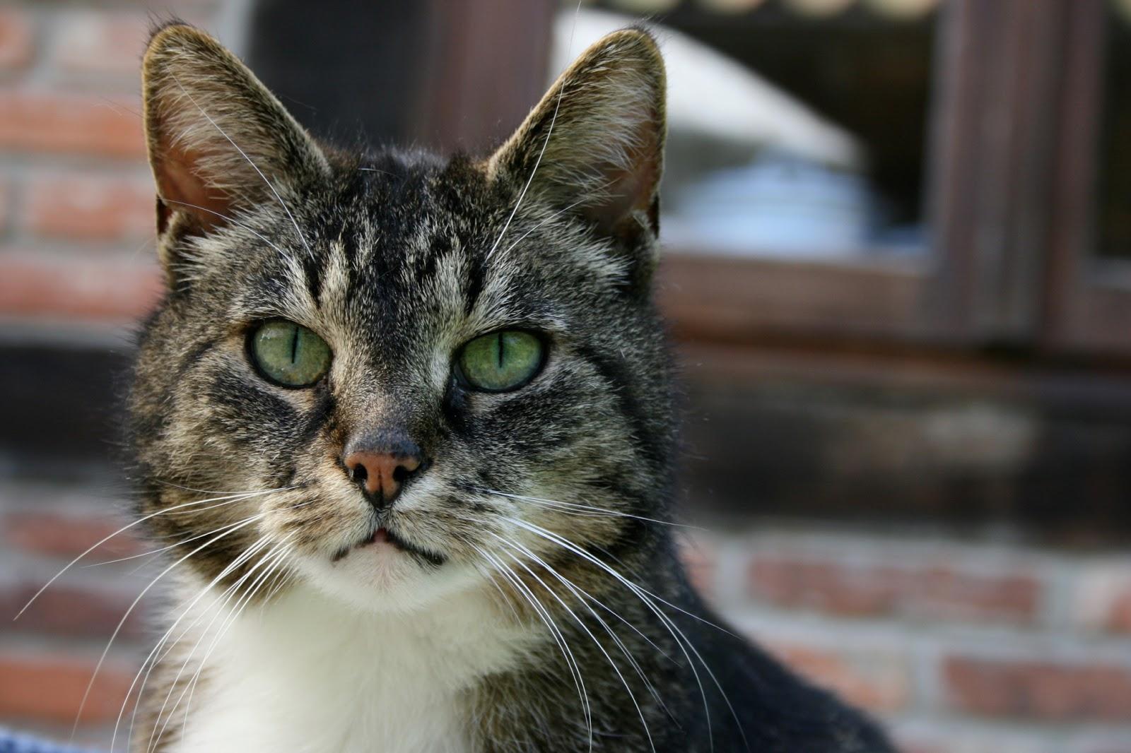 Alte Katze Frisst Und Trinkt Nicht Mehr